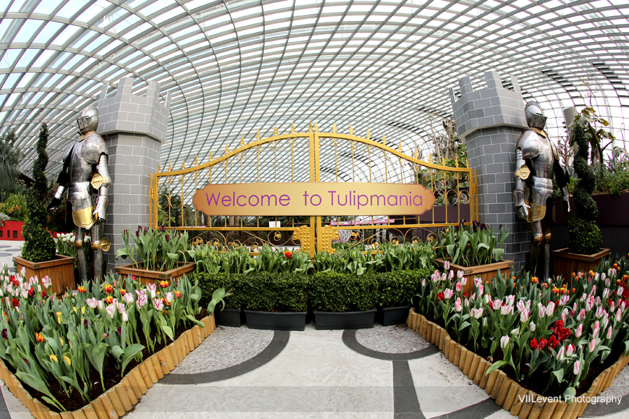 Garden By The Bay, Tulip Mania 2015. FlowerDome GBTB22March2015_0003