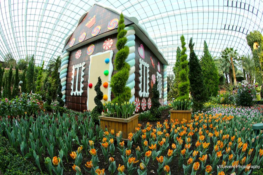 Garden By The Bay Tulip Mania 2015